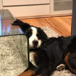 reggie-coffee-table_orig